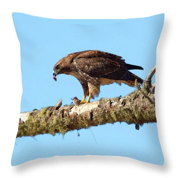 Red-tailed Hawk With Prey Throw Pillow by Betty LaRue