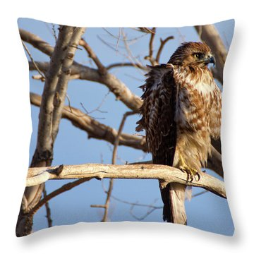Red Tailed Throw Pillow