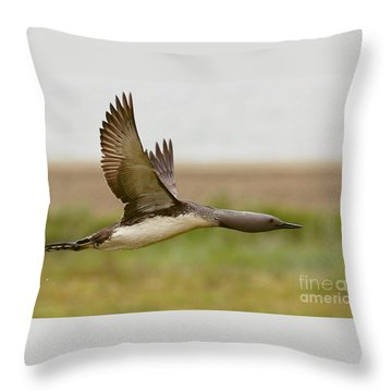 Red-throated Loon In Flight Throw Pillow