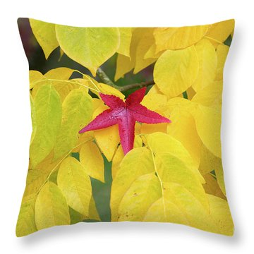 Throw Pillow featuring the photograph Red by Tim Gainey