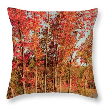 Throw Pillow featuring the photograph Red Trees by Iris Greenwell