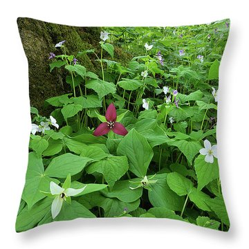 Red Trillium At Center Throw Pillow by Alan Lenk