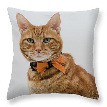Red Tubby Cat Tabasco Halloween Throw Pillow