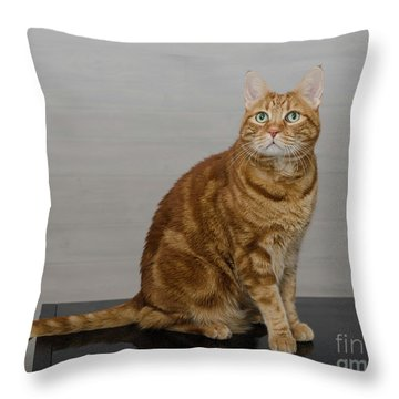 Red Tubby Cat Tabasco On Black Table Throw Pillow