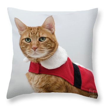 Red Tubby Cat Tabasco Santa Clause Throw Pillow
