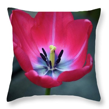 Red Tulip Blossom With Stamen And Petals And Pistil Throw Pillow
