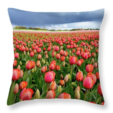 Red Tulip Field Throw Pillow