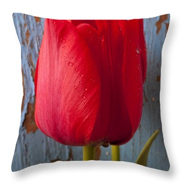 Red Tulip Throw Pillow by Garry Gay