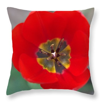 Red Tulip In 3d Throw Pillow by Liz Allyn