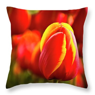 Red Tulip Throw Pillow by Tamyra Ayles