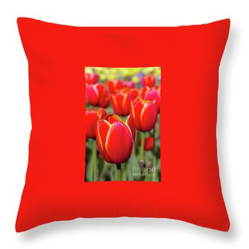 Red And Yellow Tulips I Throw Pillow