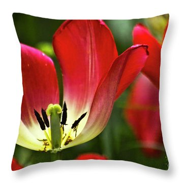Red Tulips Petals Throw Pillow by Heiko Koehrer-Wagner