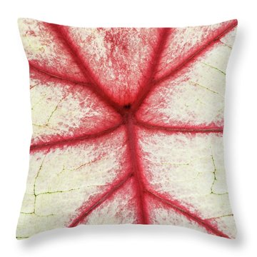 Red Veins Of A Coleus Plant Throw Pillow