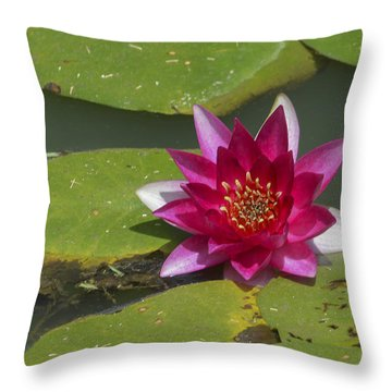 Red Water Lily Throw Pillow by Linda Geiger
