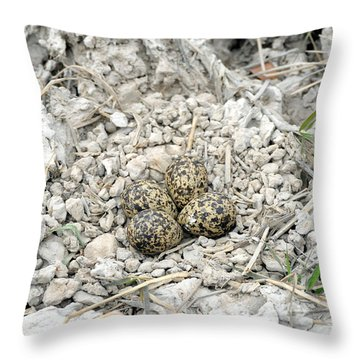 Red-wattled Lapwing Nest Throw Pillow