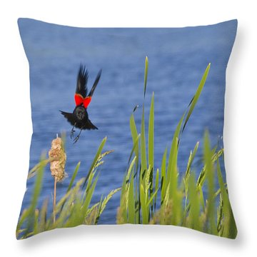 Red Wing Bow Throw Pillow by Shelly Gunderson