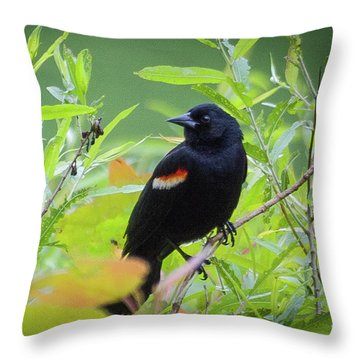 Red Wing In The Marsh Throw Pillow