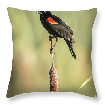 Red-wing On Cattail Throw Pillow by Robert Frederick