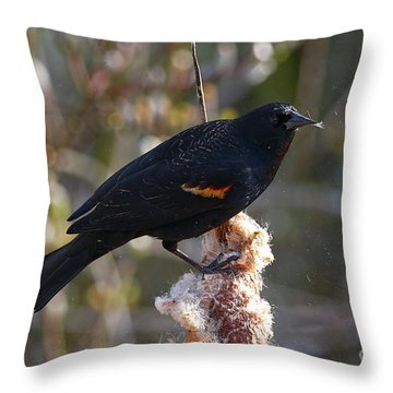 Throw Pillow featuring the photograph Red-winged Blackbird On Cattail Reed by Sharon Talson