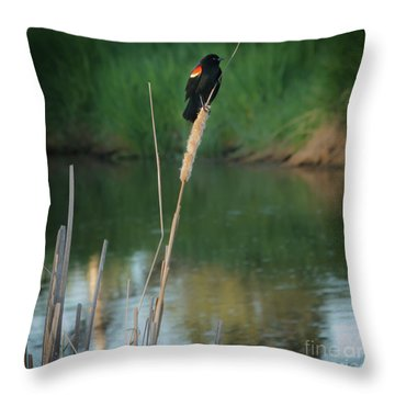 Red Winged Blackbird  Throw Pillow by Robert Bales