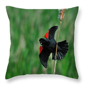 Red-winged Blackbird Throw Pillow by Tony Beck