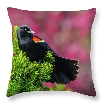 Red Winged Blackbird With Crabapple Blossoms Throw Pillow