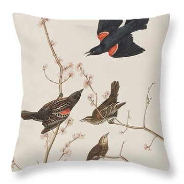 Red Winged Starling Or Marsh Blackbird Throw Pillow