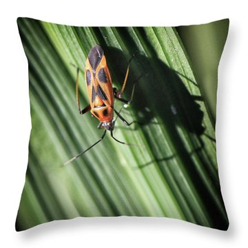 Red With Black Insect Throw Pillow by Stephan Grixti