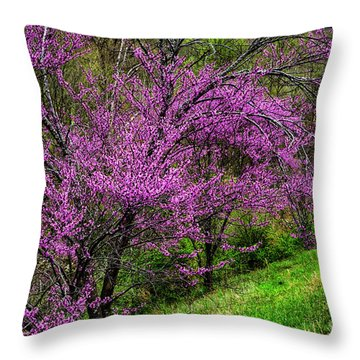 Throw Pillow featuring the photograph Redbud And Path by Thomas R Fletcher
