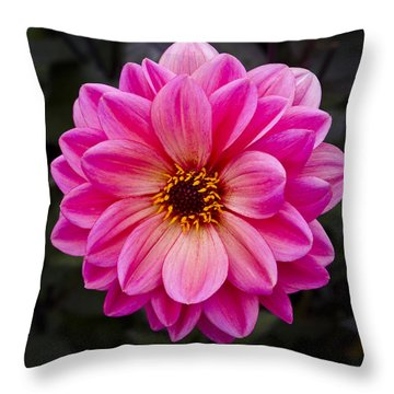 Reddish Dahlia Throw Pillow