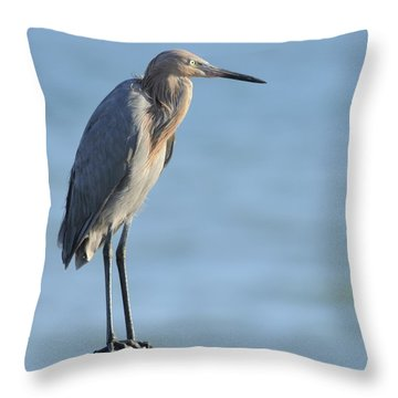 Throw Pillow featuring the photograph Reddish Egret Perched On A Jetty Rock by Bradford Martin
