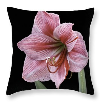 Throw Pillow featuring the photograph Reddish Pink Lily by Ken Barrett