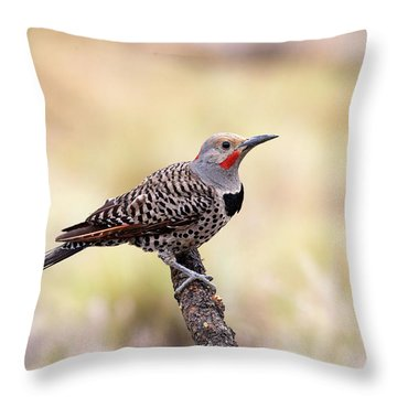 Redshafted Northern Flicker Throw Pillow