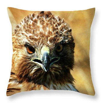 Redtail Hawk Throw Pillow