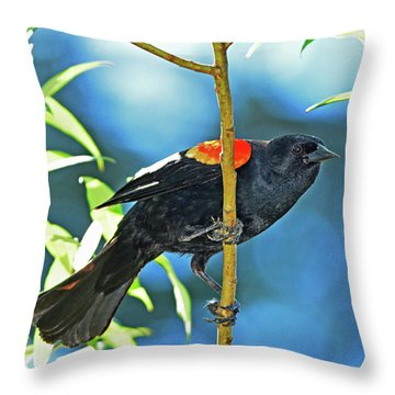 Redwing Blackbird Throw Pillow by Jack Moskovita
