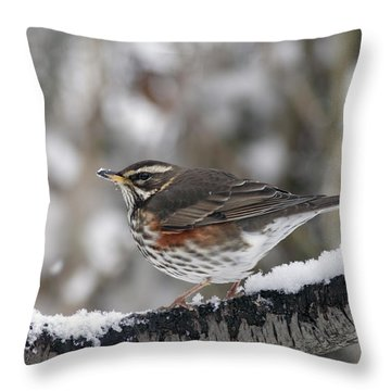 Redwing Perched On A Snowy Branch Throw Pillow