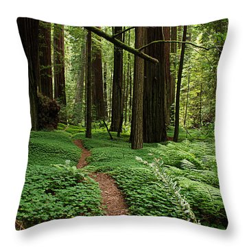 Redwood Forest Path Throw Pillow