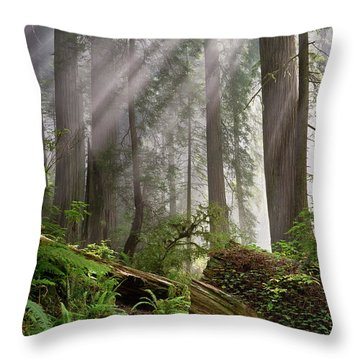 Redwood Light Throw Pillow