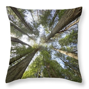 Redwood Towering Giants Throw Pillow
