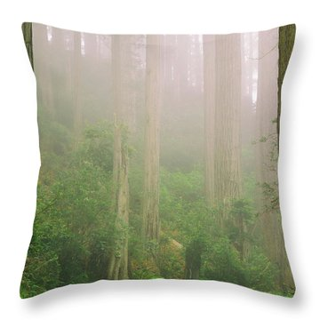 Redwoods Fog Throw Pillow