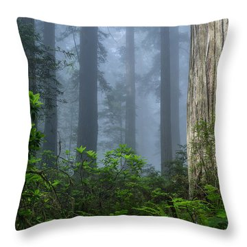Redwoods In Blue Fog Throw Pillow
