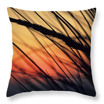 Reeds And Sunset Throw Pillow by Brent Black - Printscapes