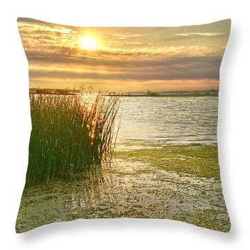 Reeds In The Sunset Throw Pillow