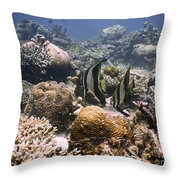 Throw Pillow featuring the photograph Reef by Gary Bridger