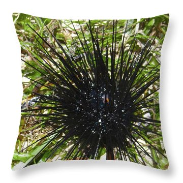 Reef Life - Sea Urchin 1 Throw Pillow