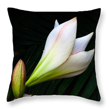 Refined Elegance Throw Pillow