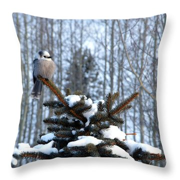 Refined Little Gray Jay In Colorado Throw Pillow
