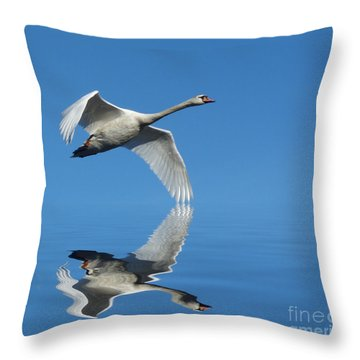 Reflected Swan Throw Pillow