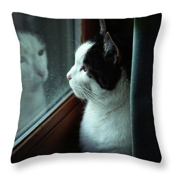 Reflections Of A Cat Throw Pillow