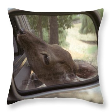 Throw Pillow featuring the photograph Reflections Of A Deer by Wanda Brandon